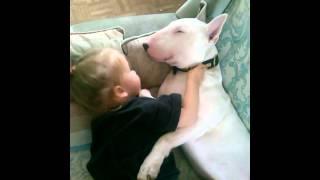 Bull Terrier Cinsi Köpekle Yatan Minik Kız