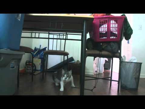 Funny Stalking Cat Video