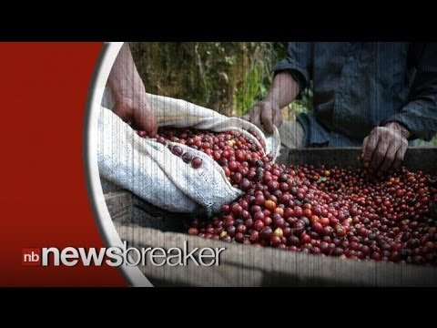 Coffee Prices to Rise as Fungus Destroys $1 Billion Worth of Beans in Latin America