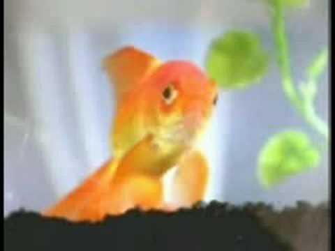 cute goldfish cartoon. goldfish from FUN TUBE