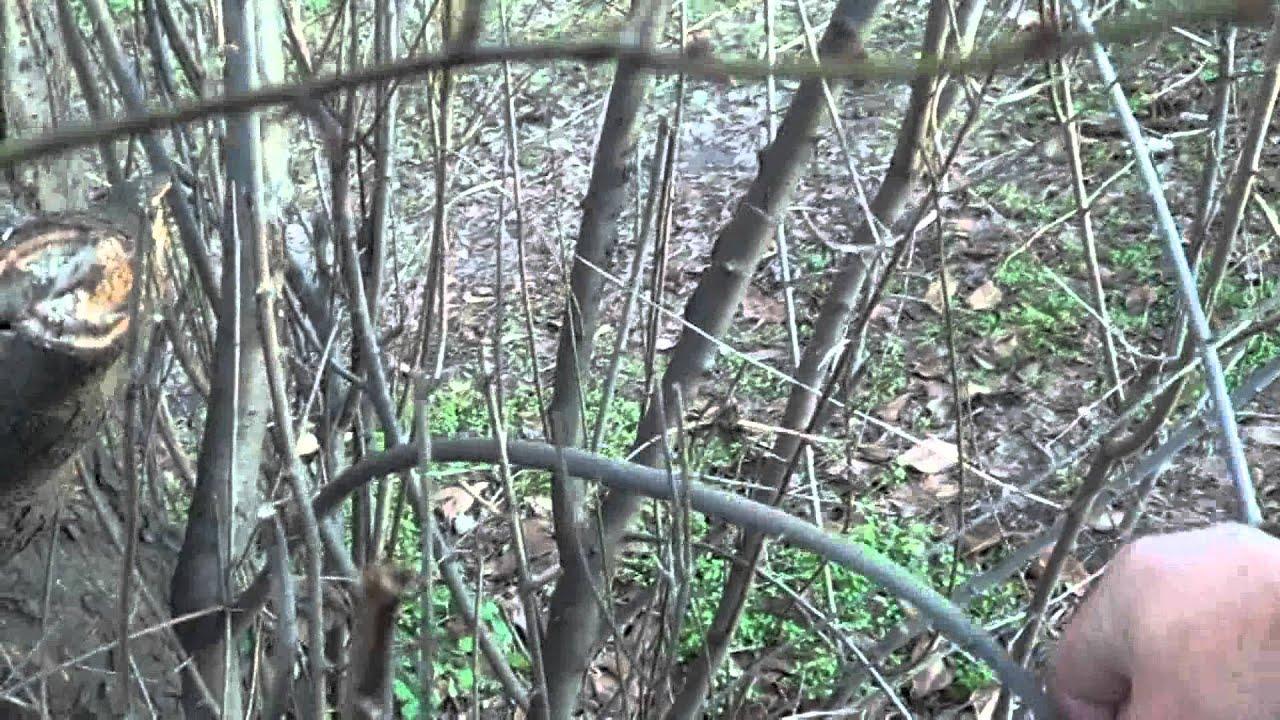 Лук в лесу своими руками