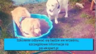 Pozytywne szkolenie nastokatkow i dorosłych piesków w Krakowie