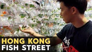 $250 GEM TANG?! Gold Fish Street in Hong Kong!! 金魚街