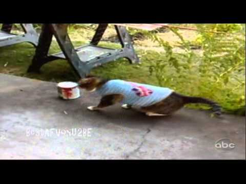 ☺ AFV Part 206 (BRAND NEW!)  America's Funniest Home Videos (Funny Clips Fail Montage Compilation)