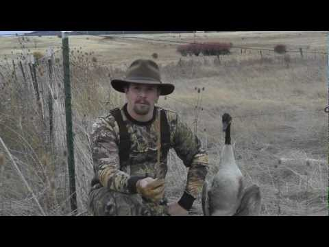 G5 SGH Vs Canadian Goose - Flu Flu Arrow Penetration Test - In Flight Archery