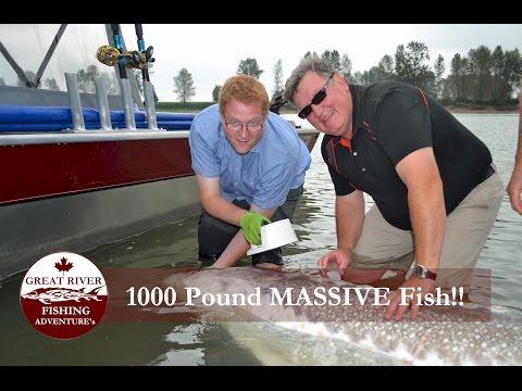 Great River Fishing: Giant Sturgeon - 11ft 8