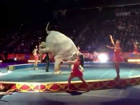 Ringling Bros Circus United States LARGEST CONVICTED CRUELTY CRIMINALS!-- DON'T BUY A TICKET!