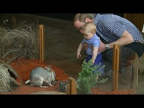 Prince George Goes To The Zoo With Kate And Wills In Australia video