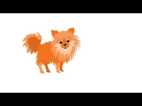 How to Remove Pet and Urine Odors from Your Home Fast