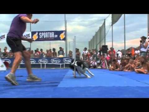 Sport & Cultura a 4 Zampe 2011 7° Blocco