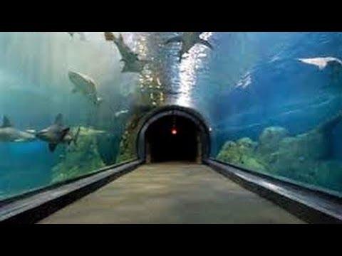 CAMDEN ADVENTURE AQUARIUM EXPERIENCE - NJ New Jersey Travel Tour Guide Zoo Shark Sharks