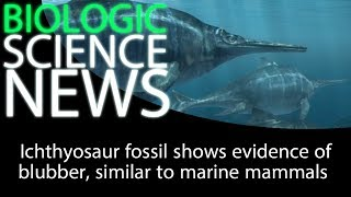 Science News - Ichthyosaur fossil shows evidence of blubber, similar to marine mammals