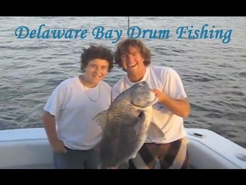 Black drum fishing delaware bay fishing charter youtube for Barnegat bay fishing report
