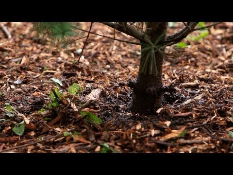 How to Mulch a Plant | Lawn & Garden Care