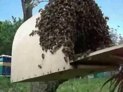 Пчеловодство. Улей (гнездо) для роя