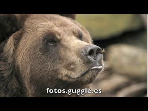 Fotos increibles extraordinarias de animales