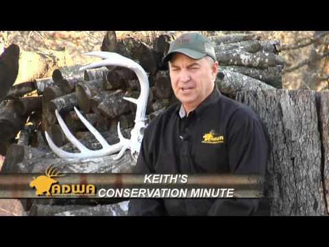 Big & Typical | Deer & Wildlife Stories