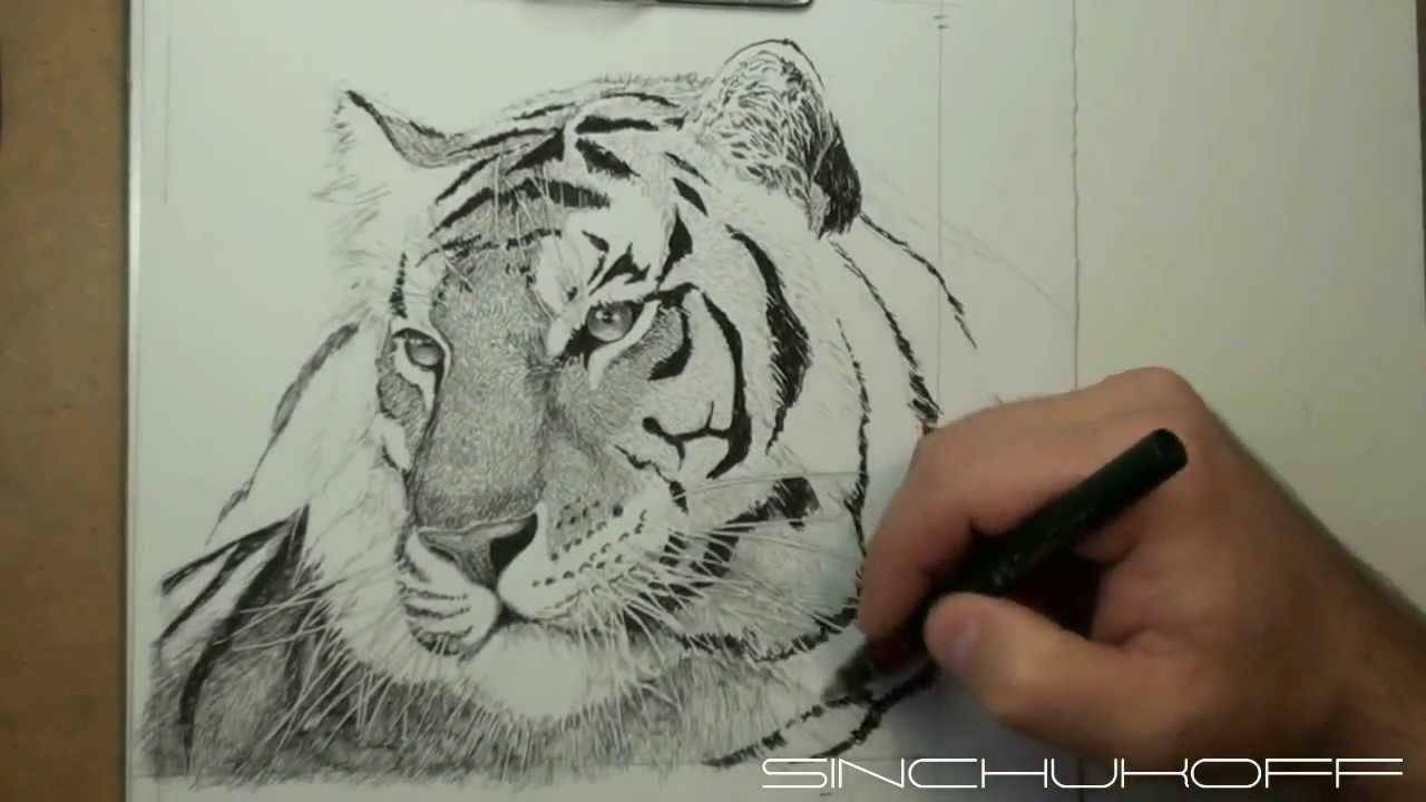 тигр нарисованный карандашом фото