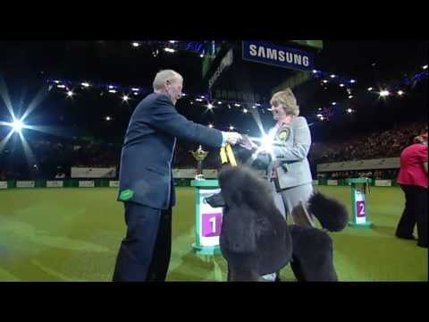dfs Crufts 2011 - Best In Group Utility
