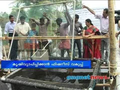 Fish Farming  Pisciculture  Extends To New Level  Gift Tilapia