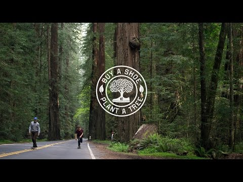 etnies Buy a Shoe, Plant a Tree