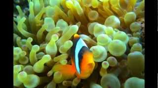 Scuba Diving Red Sea - Sharm Plaza Housereef (Egypt)