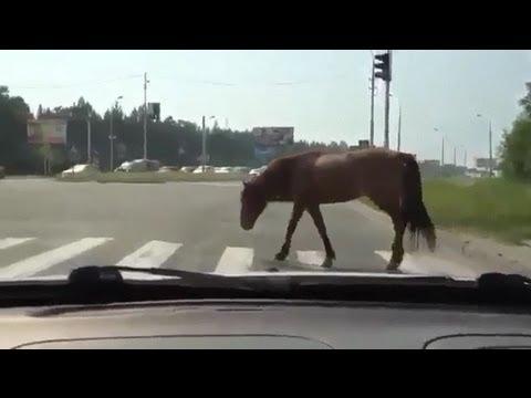 Лошадь-пешеход