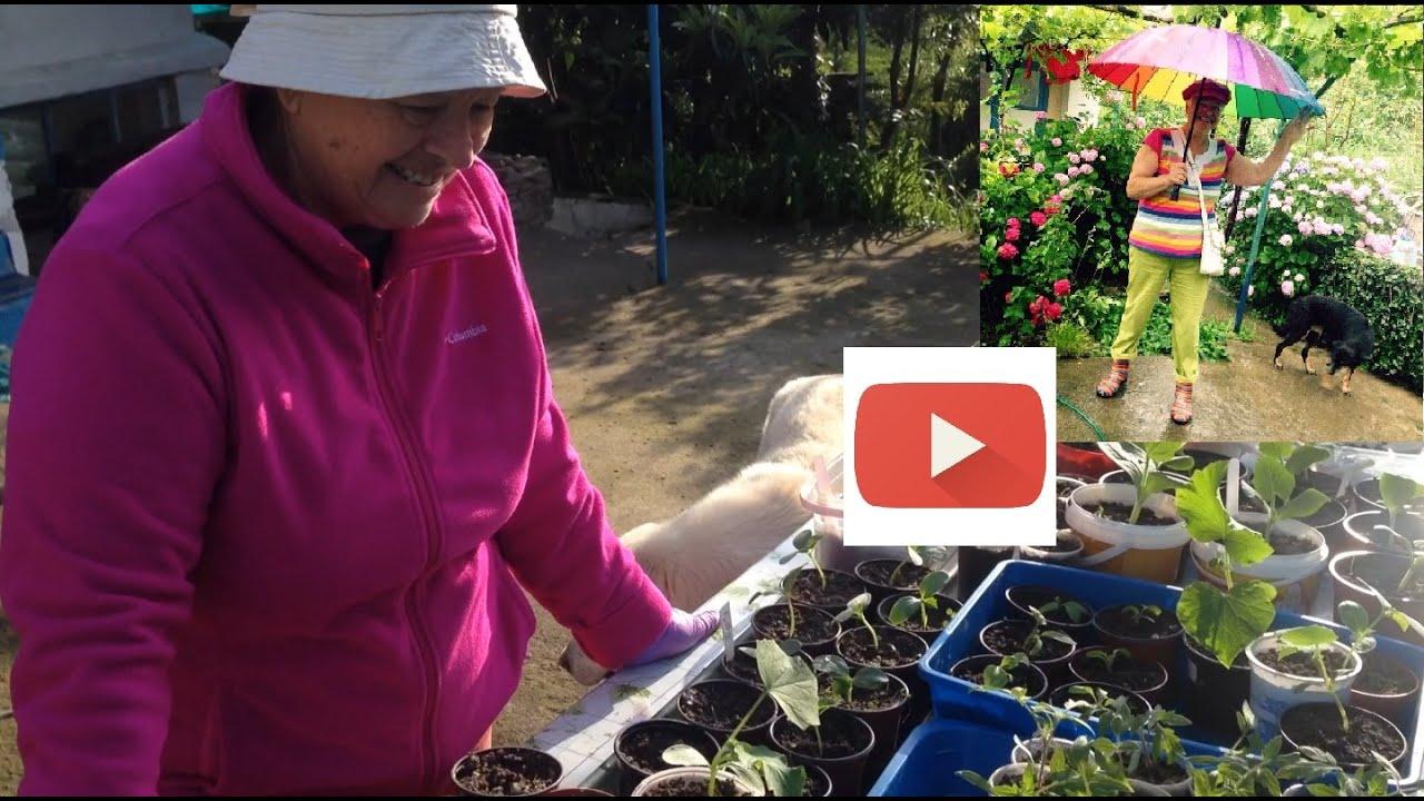 Чем подкормить рассаду помидор чтобы были толстенькие 55