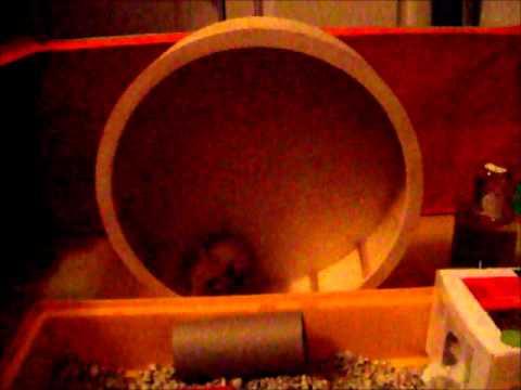 Hamster Size Hamster Wheels Size Matters