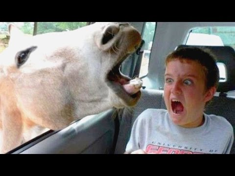 Funniest and most hilarious moments on Earth that can make anyone laugh - Funny compilation