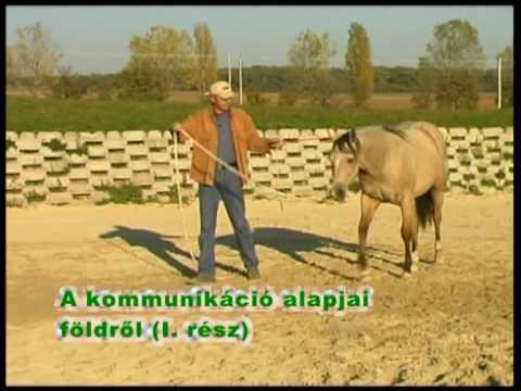 Hogyan kezdjünk foglalkozni a lovunkkal? 1. rész