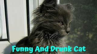 Funny And Drunk Cat || Funny video 2018