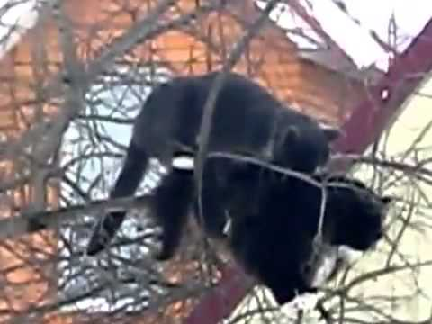 Cats Have Sex On A Tree Funny Animal Videos video