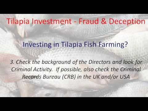 Tilapia Investment   High Risk Fish Farming In Ghana   Investing In Tilapia Fish Farming