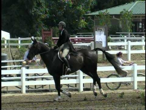 0 Samaritan  USEF Hunter Classic (Handy) Winning trip. For sale