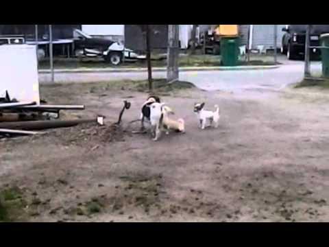 Doggy Porn video
