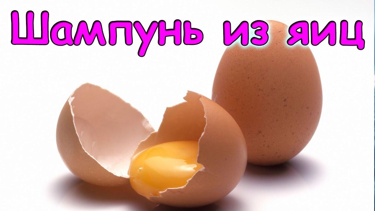 Шампунь из яиц своими руками