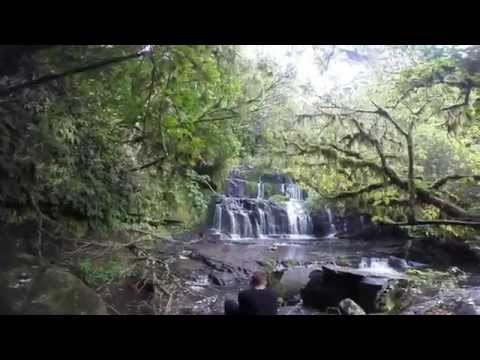 New Zealand Adventure Day 4 | The Catlins Forest