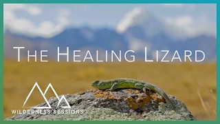 The Healing Lizard Of Bolivia - Wilderness Sessions - Earth Unplugged