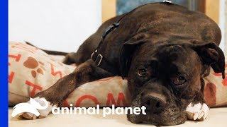 It's Time For Petey to Lose a Few Pounds! | My Big Fat Pet Makeover