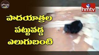 పాదయాత్రల పట్టువడ్డ ఎలుగుబంటి | Bear Hulchul In Alur | Jordar News | hmtv