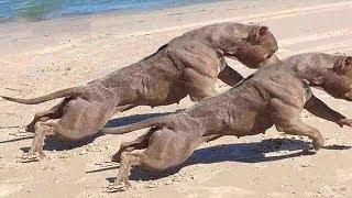 Asla Kaçamayacağınız EN HIZLI 10 Köpek Cinsi