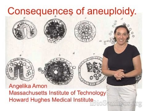 Aneuploidy and non-disjunction | McMaster Pathophysiology ...