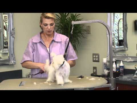 Grooming a Maltese Puppy with Courtney Ramstack