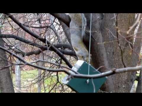 A Squirrel Spin & Flip on squirrel proof bird feeder. USA made RollerFeeder