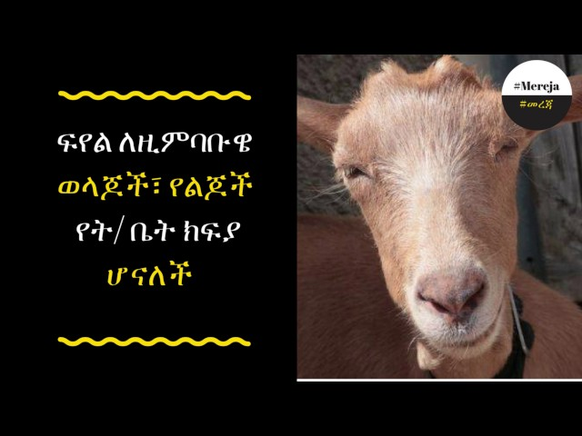 ETHIOPIA -School Fees Now Payable with Goats in Zimbabwe