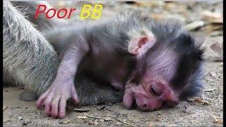 Newborn Nearly Pass Away No Milk | Million Sad To See Newborn & No Milk For It