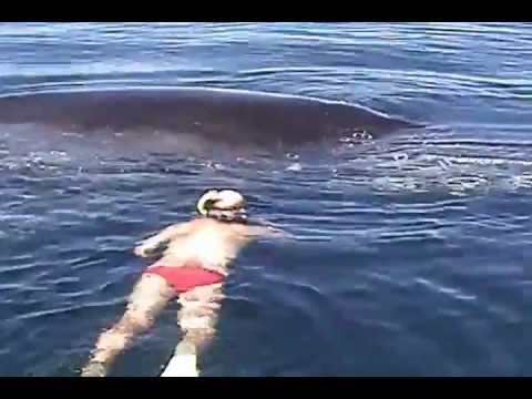 Humpback Whale Expresses Joy and Gratitude After Being Freed From a Net