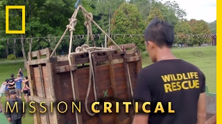 How to Move a Rhino | Mission Critical