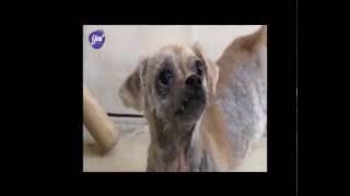 Thucungtv - Hội cứu hộ động vật SAR